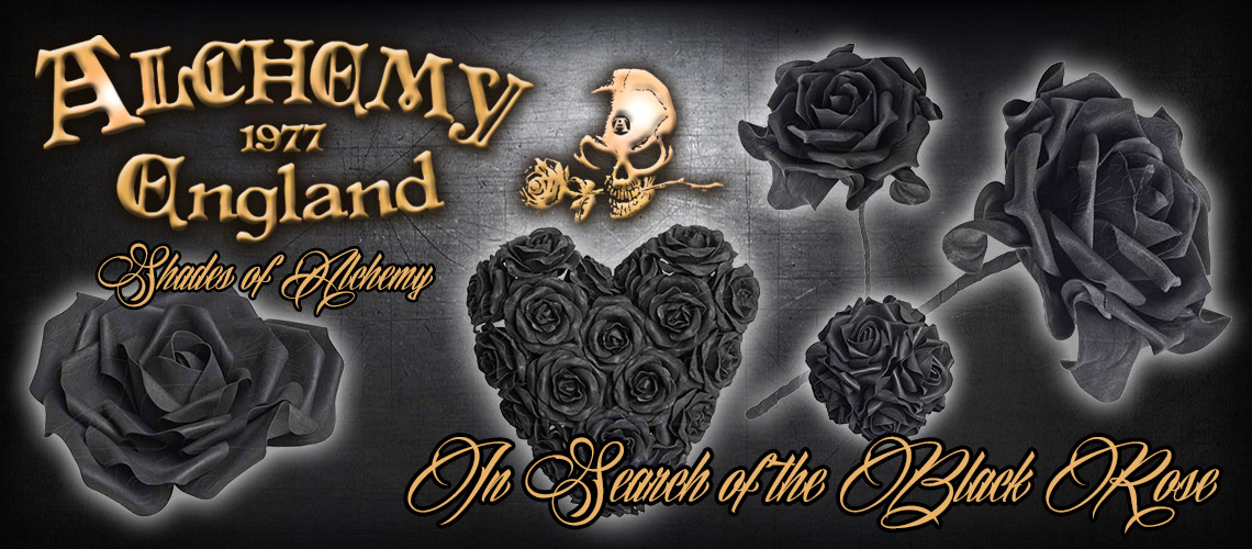 Search Of Black Rose