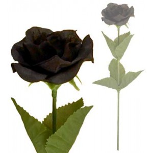 A single black rose shades of Alchemy